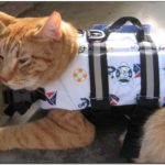 Cat Life Jacket Shark
