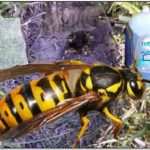 How To Get Rid Of Yellow Jackets In Ground Naturally