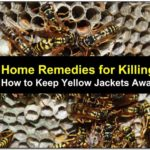 Yellow Jacket Repellent Home Remedy